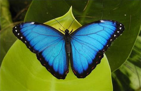 Butterflies Go Free, Insectarium, Montreal, Quebec, Canada